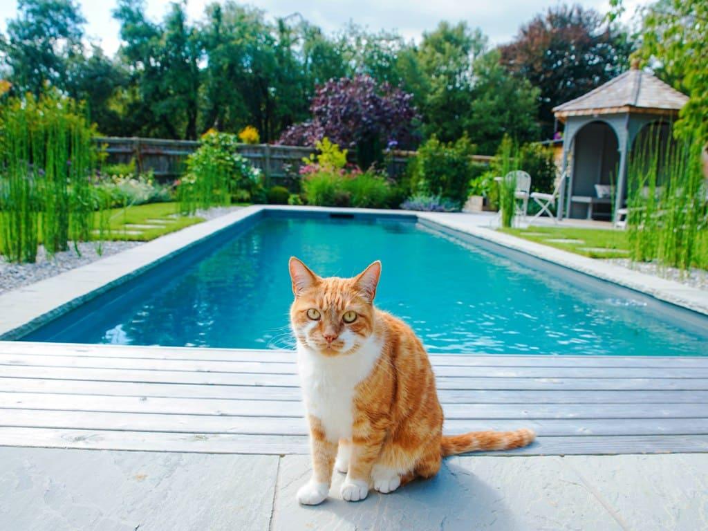 Даже коты любят уличные бассейны